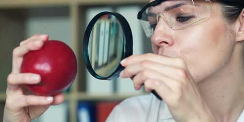 scientist uses magnifying glass to observe red apple